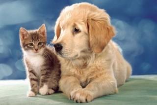аптеки для животных